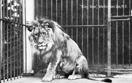 """King Dick"" (named after Prime Minister Richard Seddon) was Wellington Zoo's first animal in 1906. Wellington Zoo"