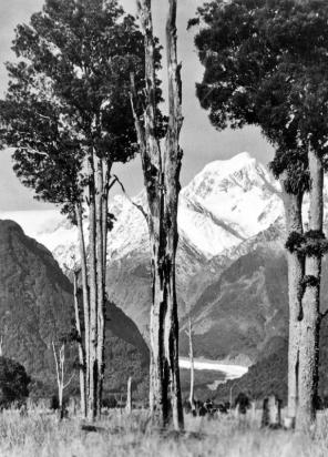 Fox Glacier and Mt Tasman