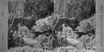 BOTANICAL GARDENS, WELLINGTON